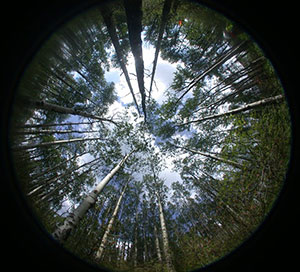 The view from a wireless optical sensor measuring continuous light interception in a boreal forest stand